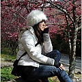 2011 武陵櫻花祭 306.JPG