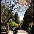 2009桃花緣 167.JPG