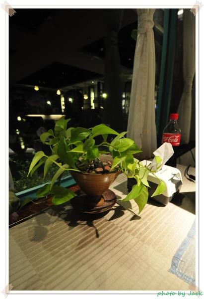 桌上的小盆栽.JPG