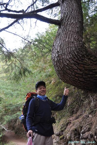 長相奇特的樹