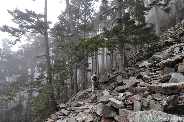 黑森林中漫起一陣雲霧