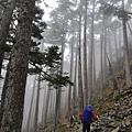 雲霧中的黑森林