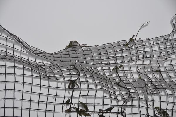 連鐵絲網都結冰了
