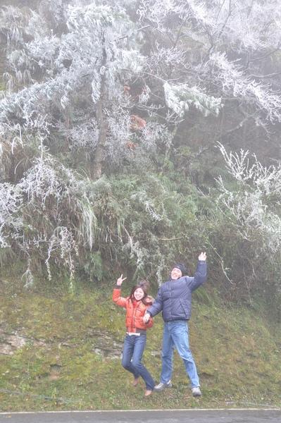 路樹都結霜了