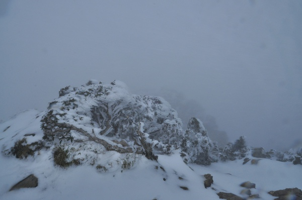 峰頂的樹全都結冰了2