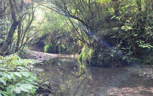 途中的小溪2