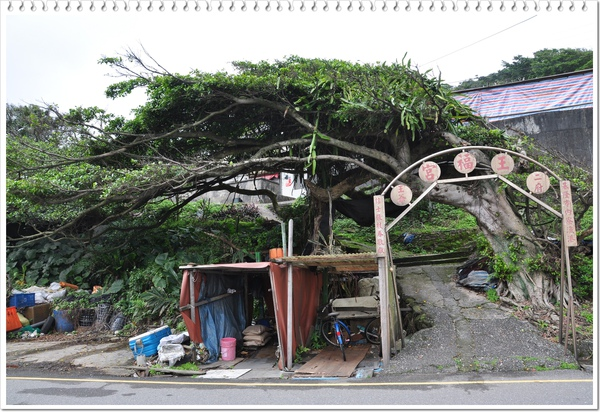 造型特殊的樹