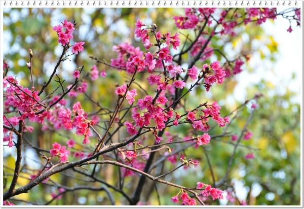 慶城公園 3-10