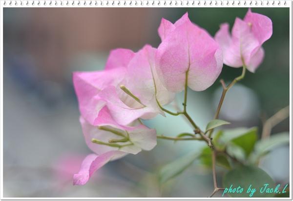 慶城公園_01 001.JPG