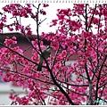 慶城公園_01 004.JPG