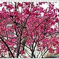 慶城公園_01 007.JPG
