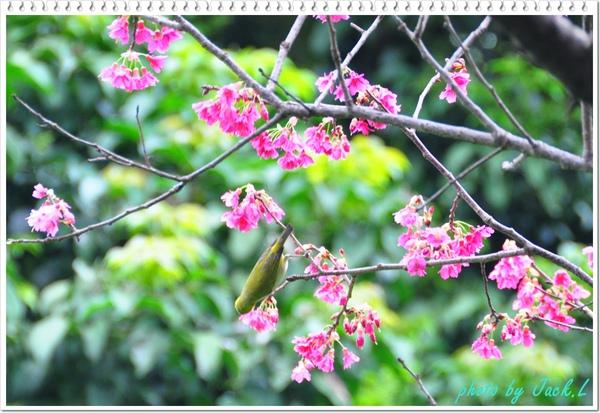 慶城公園_01 012.JPG