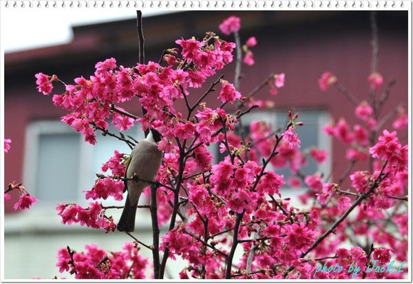 慶城公園_01 015.JPG