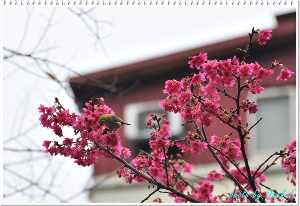 慶城公園_01 022.JPG