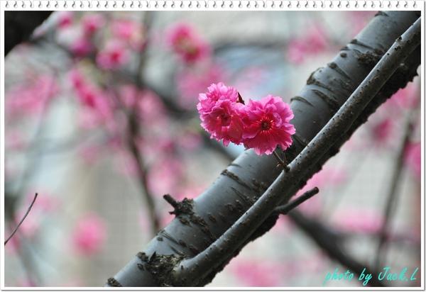 慶城公園2 020.JPG