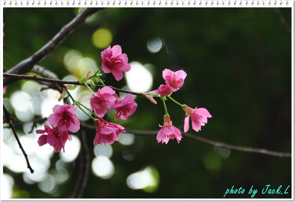 慶城公園2 022.JPG