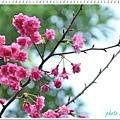 慶城公園2 031.JPG
