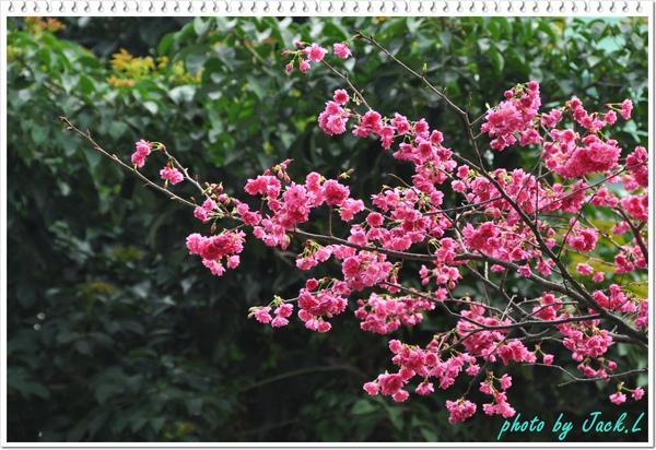 慶城公園2 062.JPG