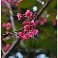 慶城公園2 075.JPG