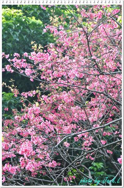 慶城公園2 087.JPG