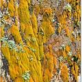 潮濕牆上的苔蘚