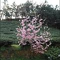 草坪頭&阿里山 050.JPG
