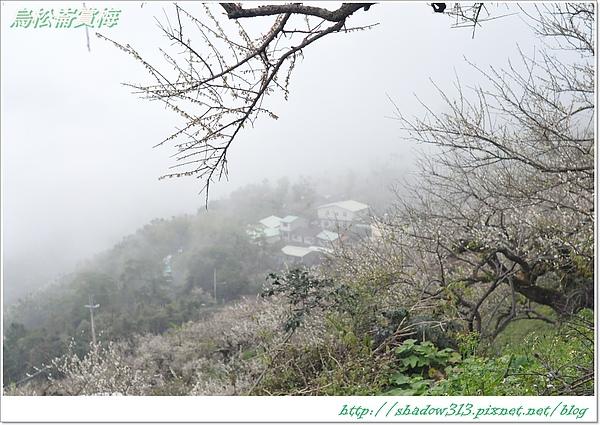 烏松崙賞梅_D90 160.JPG