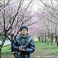 2011 武陵櫻花祭 127.JPG