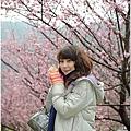 2011 武陵櫻花祭 184.JPG