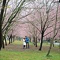 2011 武陵櫻花祭 145.JPG