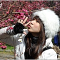 2011 武陵櫻花祭 301.JPG