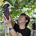 努力採葡萄