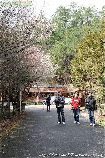 2011 武陵櫻花祭 365.JPG