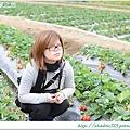 大湖草莓之旅 014.JPG