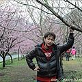 2011 武陵櫻花祭 124.JPG