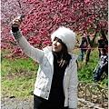 2011 武陵櫻花祭 346.JPG