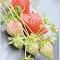 大湖草莓之旅 035.JPG