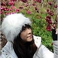 2011 武陵櫻花祭 317.JPG