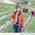 大湖草莓之旅 006.JPG