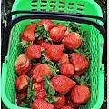 大湖草莓之旅 052.JPG