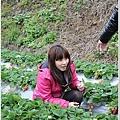 大湖草莓之旅 045.JPG