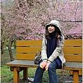 2011 武陵櫻花祭 140.JPG