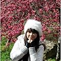 2011 武陵櫻花祭 297.JPG