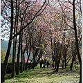 武陵露營去 158.JPG