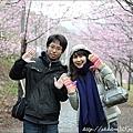 2011 武陵櫻花祭 144.JPG