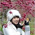 2011 武陵櫻花祭 315.JPG