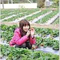 大湖草莓之旅 017.JPG