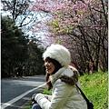 2011 武陵櫻花祭 290.JPG