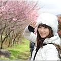 2011 武陵櫻花祭 304.JPG