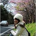 2011 武陵櫻花祭 289.JPG